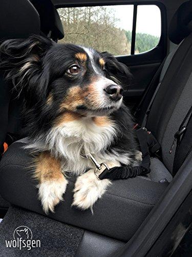 Hunde Sicherheitsgurt fürs Auto – komfortabler, sicherer Hundegurt mit flexiblem Ruckabsorber – stufenlos verstellbar – für nahezu alle Rassen und Fahrzeuge - 5