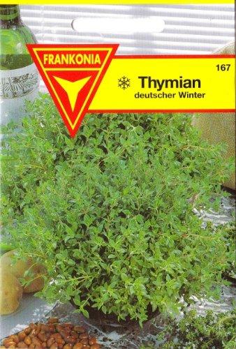 Thymian, Thymus vulgaris, ca. 200 Samen