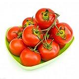 Sunlera 200pcs/bag Hausgarten-Tomaten-Samen Topf Bonsai Balkon Obst Gemüse-Samen