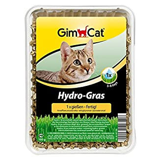 GimCat Hydro-Grass - Fresh cat grass harvested from certified open fields, ready in only 5 to 8 days - 1 bowl (1 x 150 g… 5