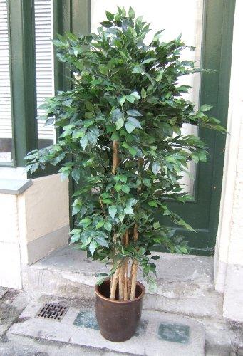 Künstlicher Jade-Ficus Multstämme ca. 2210Blätter 1,60m Spitzen-Qualität