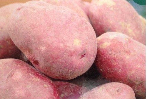 vegetable-taylors-seed-potatoes-red-duke-of-york-10-tubers-first-earlies