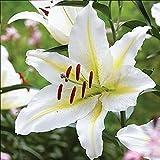 Plentree Pacchetto semi: 100 fiori di giglio s bellissimo albero di fiori bonsai come decorazione giardino fiorito porta interna e fuori: Profondo