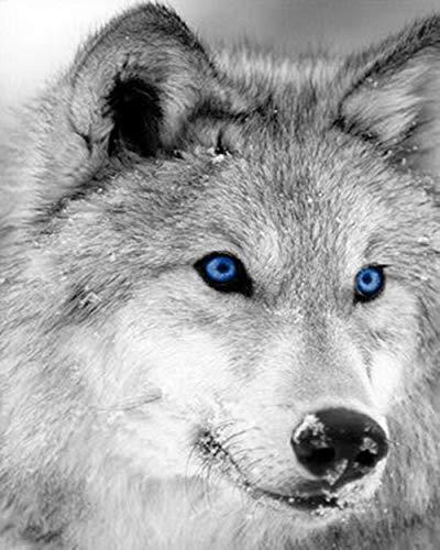 zupjl Malen Nach Zahlen Wolf GesichtDIY Malen Nach Zahlen Erwachsene Ölgemälde KitKinder Anfänger Wohnzimmer Dekor 40X50 cm (Wolf Gesicht Malen)