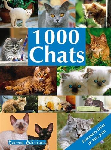 1000 Chats
