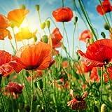 20tovaglioli sonnige papavero fiori/fiori/estate 33x 33cm