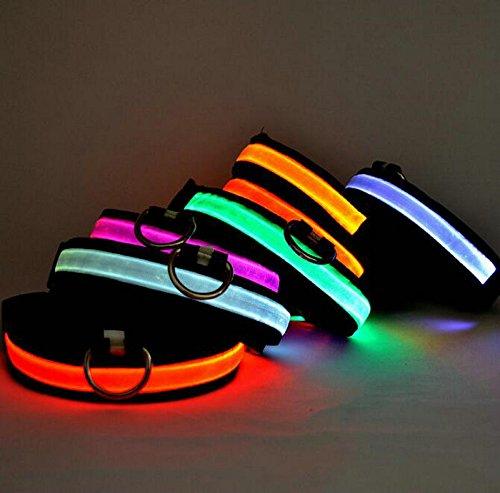 LED Halsband Leuchthalsband S/M/L/XL Hundehalsband Sicherheitshalsband Nylon Da.Wa - 2