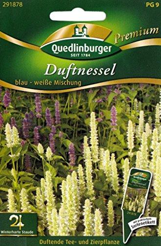 Duftnessel, Schmetterlings - Magnet, Agastache foeniculum, ca. 100 Samen