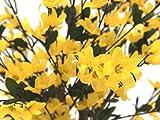 EUROPALMS Forsythia albero con 4 tronchi, giallo, 120 cm