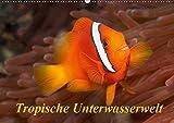 Tropische Unterwasserwelt (Wandkalender 2019 DIN A2 quer): Tropische Fische in faszinierenden Unterwasserfotos (Monatskalender, 14 Seiten ) (CALVENDO Tiere)