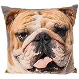 Fotodruck Motiv Englische Bulldogge Handsome Großes Kissen mit Bezug