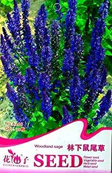 Pinkdose® 2018 heißer Verkauf Blue Woodland Salbei mehrjährige Blumensamen, Original Pack, 30 Samen/Pack, Salvia Officinalis A268 - Salvia Officinalis-salbei