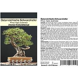 Seedeo® Österreichische Schwarzkiefer Bonsai 30 Samen