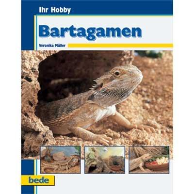 Bartagamen/V. Müller