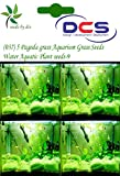 DCS(037) 5 Pagoda grass Aquarium Grass S...