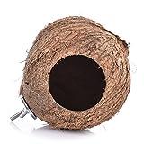 Yunt nido d' uccello nido in guscio di noce di cocco per pappagallo con scala (Consegna Casuale)