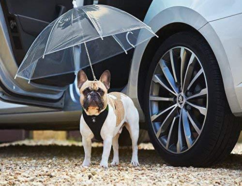 Transparenter Hundeschirm / Pet Umbrella, COUTUDI Haustierregen Zubehör mit Ultra Stark Eingebauter Leine Ideal für Welpen von 20 Zoll Zurück -