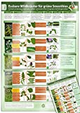 Essbare Wildkräuter für Grüne Smoothies - Erkennungskarte Teil 2 (2020) (Essbare Wildkräuter für Grüne Smoothies / Schnell eindeutig erkennen, selber sammeln und mit gutem Gefühl genießen)