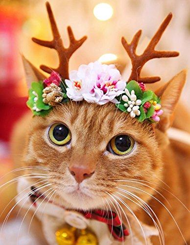 bwogue Pet Rentiergeweih Urlaub Weihnachten Halloween-Kostüm für Hunde Katzen Haar (Zubehör Kostüme Haar Halloween)