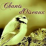 Chants d'Oiseaux: Sons de la Nature avec Le Piano Douce pour Méditation Zen et Relaxation Avant...