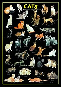International Publishing RICORDI Gold - Puzzle de Gatos (1000 Piezas) Importado de Alemania