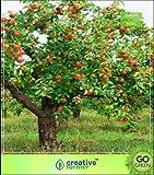 GEOPONICS Seme della frutta: Semi HomSEED piazzale esterno Lig dei semi (5 per pacchetto)