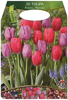 Großpackung Mit 20 Pastellfarbene Tulpen Farbmischung, Zwiebelgröße 1112 0