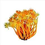 Designeez Plastic Aquariums & Tanks (Style: White & Size: S) #3007