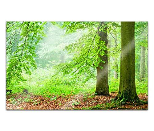 Acrylglasbilder 80x50cm Baum Wald grün Landschaft Bäume Licht Acryl Bilder Acrylbild Acrylglas Wand Bild 14H046