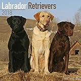Labrador Retrievers Calendar 2018 (Square)