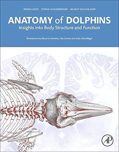 Anatomy of Dolphins Cover Image