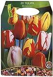 Dominik Blumen und Pflanzen, Großpackung mit 20...