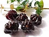 Shopmeeko 10 Stücke Bonsai Surinam Kirschpflanze Pitanga Obstbaum Pflanze Seltene Obstpflanze Für Hausgarten Bio Obst pflanze: 5