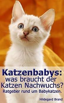 Katzenbabys: was braucht der Katzen Nachwuchs?: Ratgeber rund um Babykatzen (German Edition) eBook: Hildegard Brand