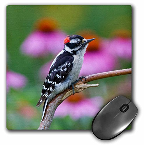 danita-delimont-birds-downy-woodpecker-near-flower-garden-marion-illinois-usa-mousepad-mp-209249-1