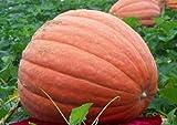 Kürbis - Kürbissorten Anbau und Rezepte