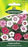 Federnelke, Federnelken Mischung, Dianthus plumarius, ca. 60 Samen