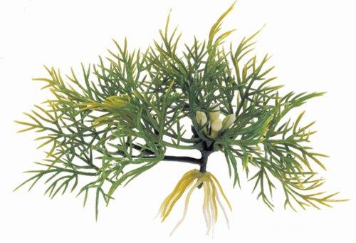 planta-flotante-fanwort
