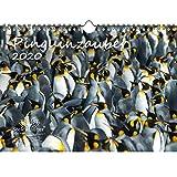 Pinguinzauber DIN A4 Kalender 2020 Pinguin - Seelenzauber