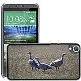 Grand Phone Cases Bild Hart Handy Schwarz Schutz Case Cover Schale Etui // M00141005 Cape Barren Gänse Gänse Tier // HTC Desire 820