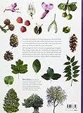Image de Dictionnaire visuel des arbres et arbustes communs