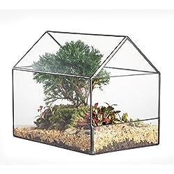 Terrarios para cactus pequeños