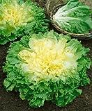 Endiviensalat Escariol grüner - Endivien Broadleaf Batavian - Salat - 1000 Samen