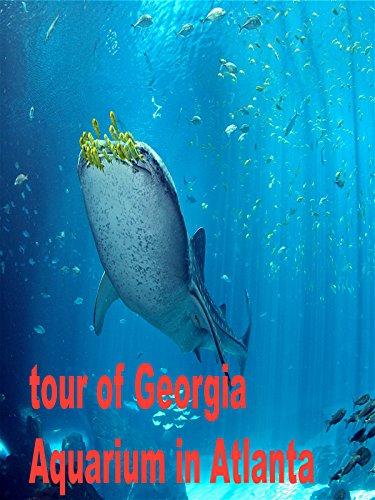 tour-of-georgia-aquarium-in-atlanta-travel-destinations-ov