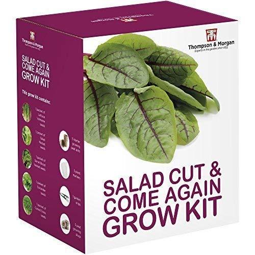 Giardiniere Regali Insalata Taglio e come di Nuovo Seme Kit per Far Crescere Scatola 5 Verde Giardino Contorni Crescere; Lettuga Crocifera Sangue