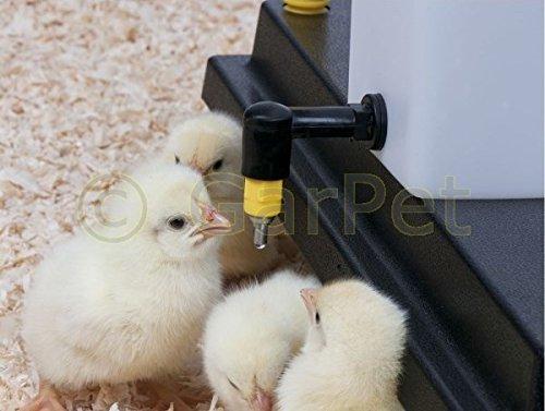 Küken Nager Hasen Kaninchen Hühner Geflügel Nippel Wasser Tränke Trinkflasche (1000 ml) - 6