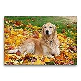 Premium Textil-Leinwand 75 x 50 cm Quer-Format Golden Retriever | Wandbild, HD-Bild auf Keilrahmen, Fertigbild auf hochwertigem Vlies, Leinwanddruck von SchnelleWelten