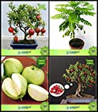 BloomGreen Co. Kaufen Seeds Combo Fruit Bonsai geeignet: Pomagranate Zwerg, Curry Baum, Riesen Guave, Litschi-Frucht Bonsai SuitableFruit Samen Für Hausgarten