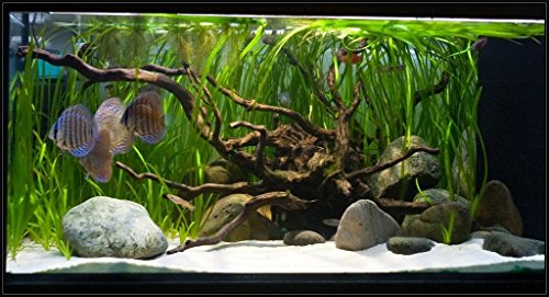 TM Aquatix Aquarium Sand White Fish Tank Substrate Natural Silica 0,5-0,8mm / 5kg 7