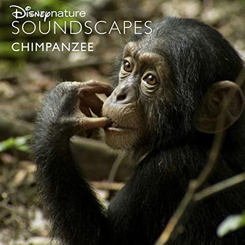 Chimps Wake Up at Dawn